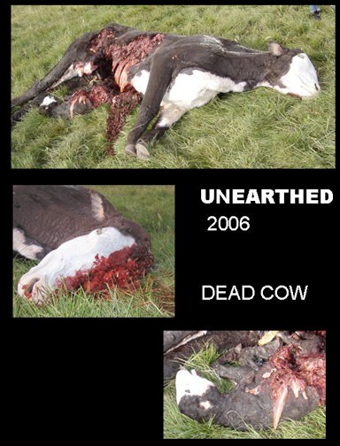 rubberCows UnEarthed